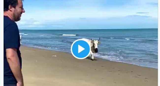 video salvini vacca spiaggia